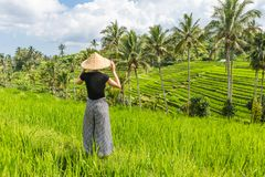 Relaxed fashionable caucasian female tourist wearing small backpack and traditional asian paddy hat looking at beautiful stock image