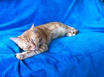Relaxed ginger cat. Relaxed orange ginger cat with eyes closed on a blue textured blanket Royalty Free Stock Images