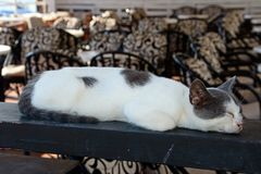 Relaxed grey and white cat, Crete. Royalty Free Stock Photo