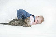 Relaxed kitten royalty free stock photos