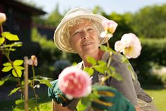 Relaxed mature lady working in her garden Stock Photography