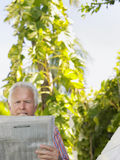 Relaxed Mature Man Reading Newspaper Royalty Free Stock Photo