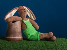Relaxed moment of dreamy rabbit. royalty free stock photography