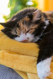 Relaxed multicolored cat. Tricolor cat relaxed on soft blanket - closeup Royalty Free Stock Photo