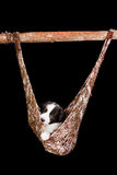 Relaxed puppy Royalty Free Stock Images