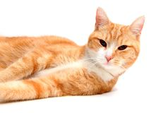 Relaxed tom cat Royalty Free Stock Images