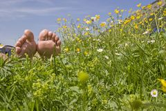 Relaxen in the flower meadow Stock Images