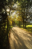 Relaxing atmosphere in the park in the morning Royalty Free Stock Photography