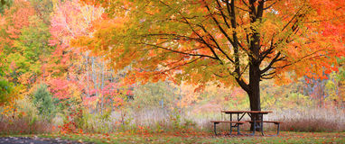 Free Relaxing Autumn Scene Royalty Free Stock Photography - 33400517