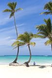 Relaxing on the beach under a palm tree Royalty Free Stock Photo