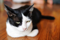 Relaxing Cat. This cat is relaxing in the temple royalty free stock image