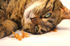 Relaxing cat. Cat relaxing near little flowers Stock Photo