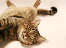 Relaxing Cat Stock Image