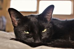 Lounge Time. Relaxing cat on a bed. Lounge life Royalty Free Stock Photo