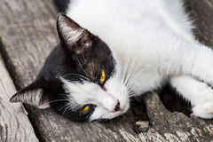 Relaxing cat on floor. Asian black and white cat with yellow eyes royalty free stock photo