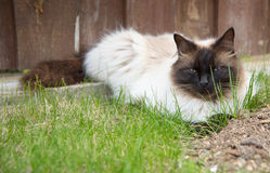 Relaxing cat in a grass Royalty Free Stock Photo