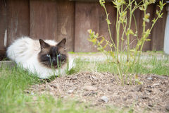 Relaxing cat in a grass Stock Photo