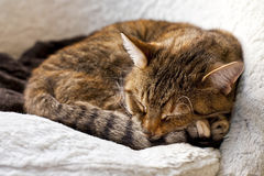 Relaxing cat at home Stock Photos