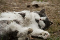 Relaxing cat Royalty Free Stock Photography