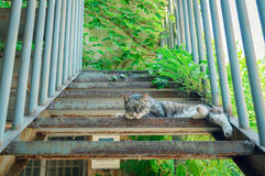Relaxing cat. The cat lying on stair to relax stock photo