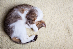 Relaxing cat Stock Images