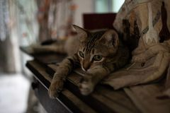 Cat daily life is relaxing royalty free stock images