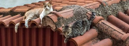 Relaxing cats Royalty Free Stock Photography
