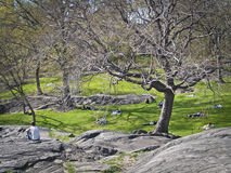 Relaxing Central Park Stock Photography