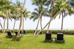 Relaxing deck chairs at tropical resort with nobody. Relaxing deck chairs at tropical resort with lush grass with nobody Stock Image