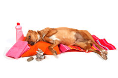 Relaxing dog Royalty Free Stock Photography
