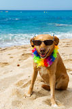 Relaxing dog at the beach Royalty Free Stock Images
