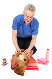 Relaxing dog becoming Spa treatment. Brown dog is relaxing in de beauty saloon while having treatment stock image