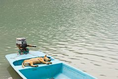 Relaxing dog in vacation on the boat Stock Photography