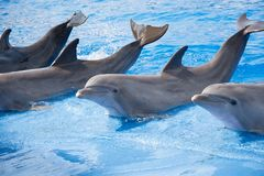 Relaxing dolphines at valencia Stock Photo