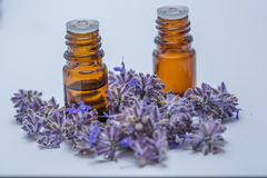 Relaxing Essential Oils. Aroma therapy essential oils surrounded with purple lavender Royalty Free Stock Image