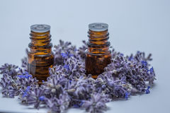 Relaxing Essential Oils. Aroma therapy essential oils surrounded with purple lavender Royalty Free Stock Photos