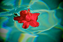 Relaxing Flower floating peacfully in a pool stock photos