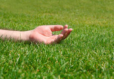 Relaxing on the grass. Male hand relaxing on a sunny meadow Royalty Free Stock Image