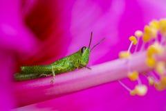 Relaxing Grass hopper stock photography