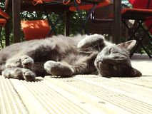 Relaxing grey cat. Here we have a beautiful grey cat relaxing outside on some wooden planks. I`ve got some nice expressions on this picture, he really looking Royalty Free Stock Photos