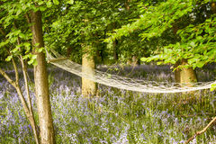 Relaxing hammock in bluebell woods Stock Image