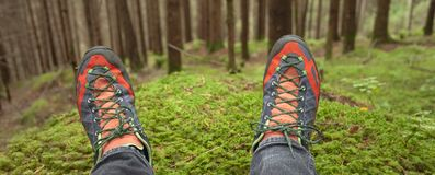 Relaxing inside a deep woods. Relaxing ine a deep woods Royalty Free Stock Photos
