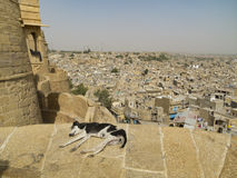 Relaxing in Jaisalmer. Dog having a nap on the edge of a wall of Jaisalmer fort in Rajasthan, India Royalty Free Stock Photo