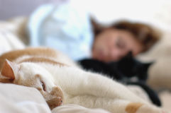 Relaxing with kittens. A woman and two cats relaxing on bed Stock Image