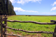 Relaxing landscape hawaii Stock Image