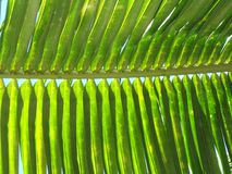 Relaxing leaf Royalty Free Stock Images