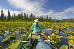 Relaxing in the Lily Pads Stock Photography