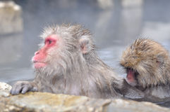 Relaxing Monkey - Stock Image. Relaxing Monkey in a natural onsen (hot spring), located in Snow Monkey, Nagono Japan Stock Photos