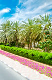 Relaxing palm trees under the sun in Dubai Royalty Free Stock Photos