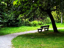 Relaxing in the park. A bench and a tree in a public park Stock Photography